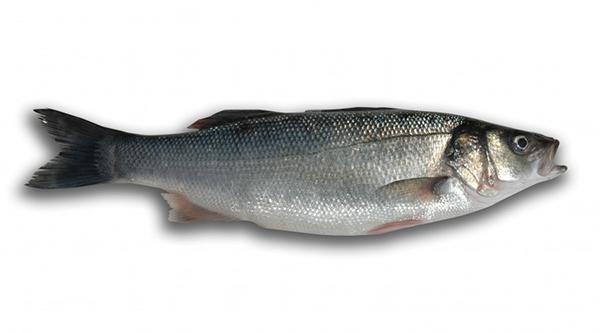 Tienda de pescados blancos